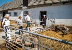 BentSchweine-8574